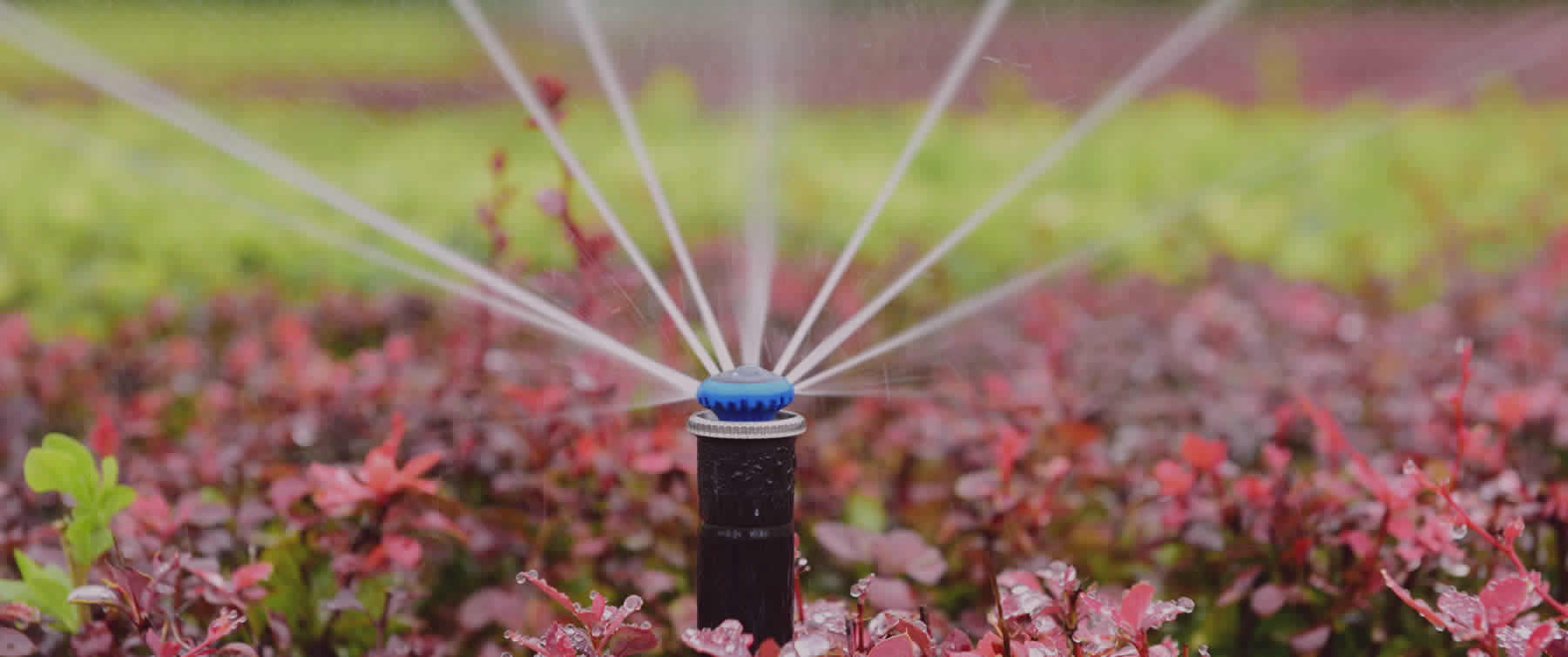 Irrigation Services by MW Landscaping of Detroit Lakes.